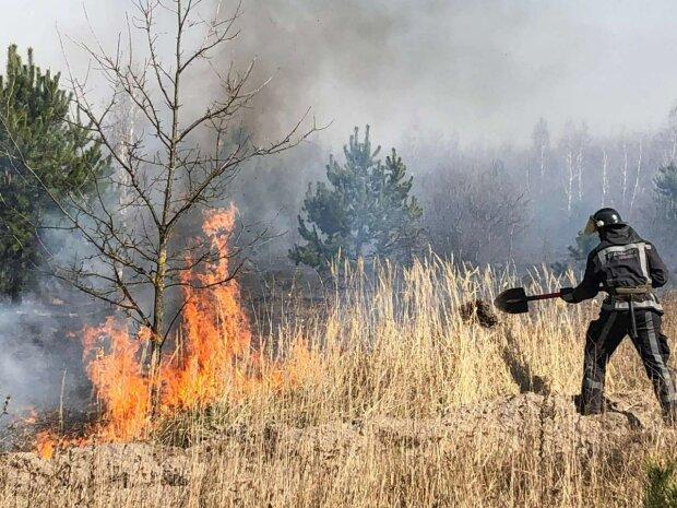Пожежа в лісі - фото УНН