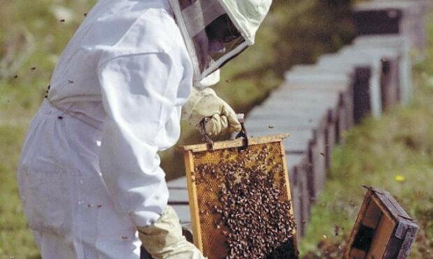 """Мертві бджоли загудуть: прикарпатський пасічник """"воскресив"""" унікальну комаху"""
