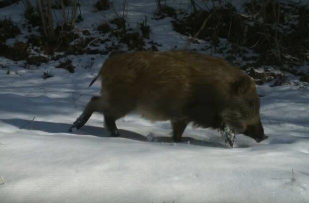 Тварини біля Фукусіми, скріншот із відео