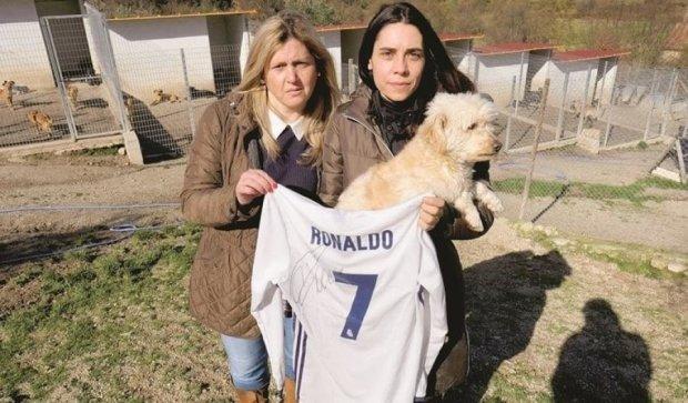 Футболка Роналду допоможе врятувати 80 собак