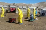 Бубонная чума, фото: youtube