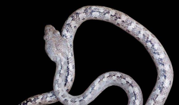 """Чудо Мадагаскару: вчені відкрили повзучого """"привида"""""""