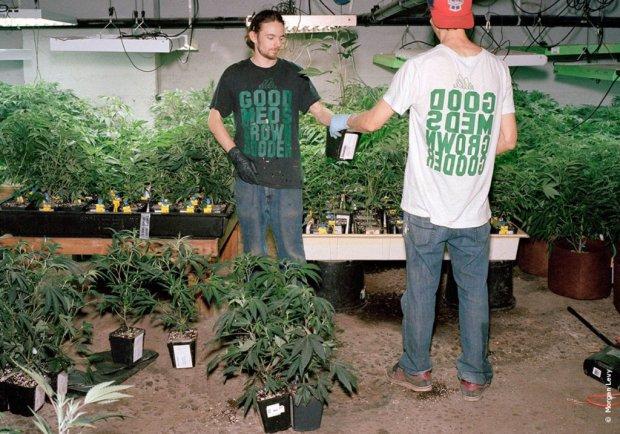 Пабло Ескобар по-українськи: чоловік вдома вирощував платнації з марихуанною
