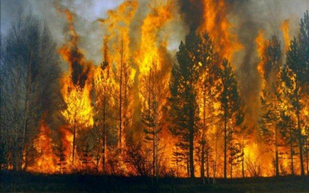 """""""Культ массового убийства"""": зомби вынудили женщину устроить огненную катастрофу"""