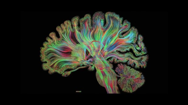 Нейрологи раскрыли новые тайны мозга: как работает наше внимание