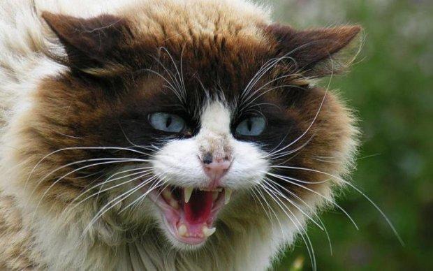 Під Харковом трьох дітей ледь не загриз скажений кіт