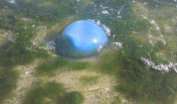 Одеські пляжі атакували небезпечні блакитні медузи (фото)