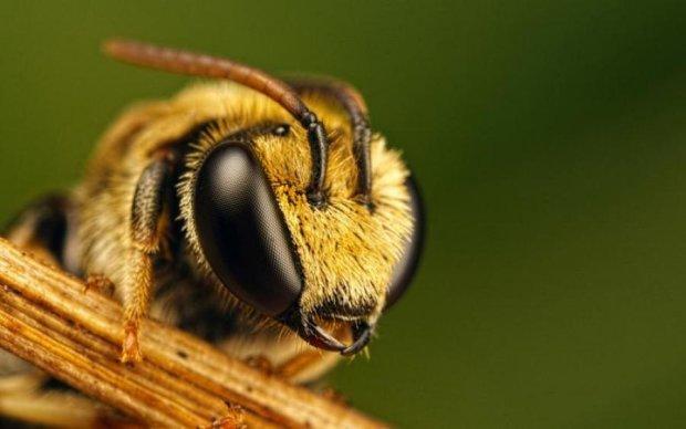 Зникнення бджіл загрожує планеті жахливими наслідками