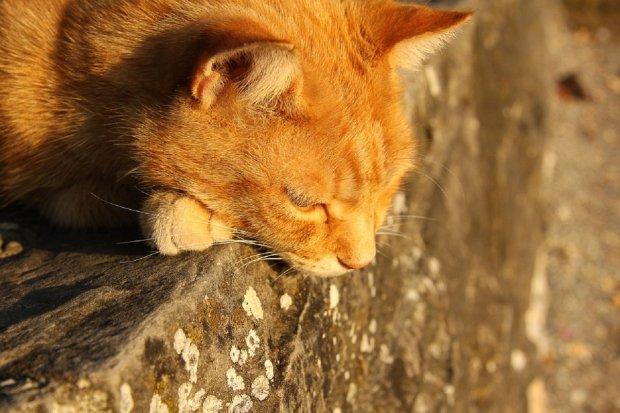 Закривавлений двір і 15 жертв: божевільний шкуродер кидався з вікна котами