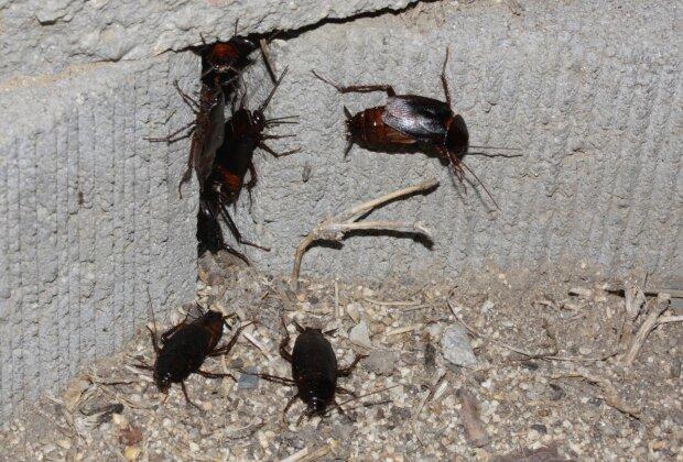 Как избавиться от тараканов, фото из открытых источников