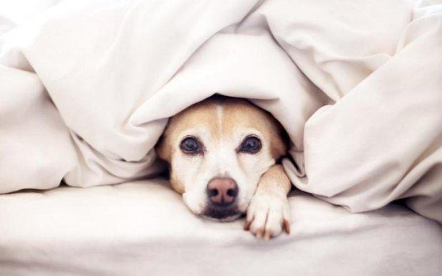 """Хто """"живе"""" в нашому ліжку"""