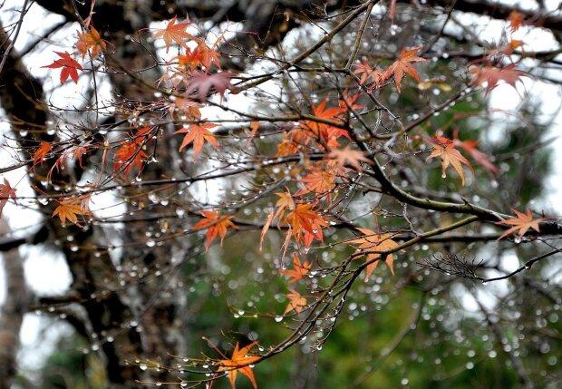 Погода в Украине, фото: detiam.com