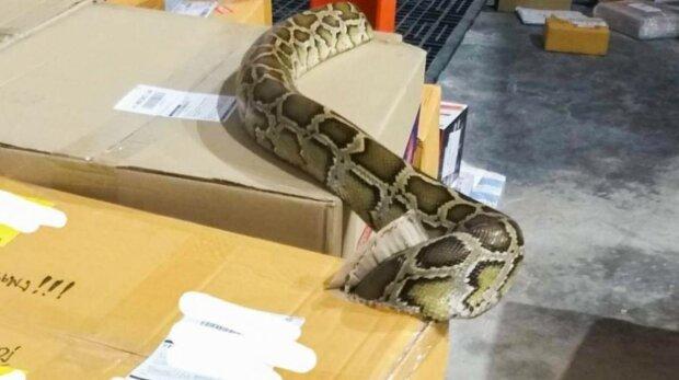 Змея в посылке, фото: свободный источник