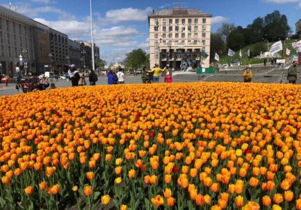 В Киеве расцвели сотни тысяч тюльпанов: нюхай и любуйся