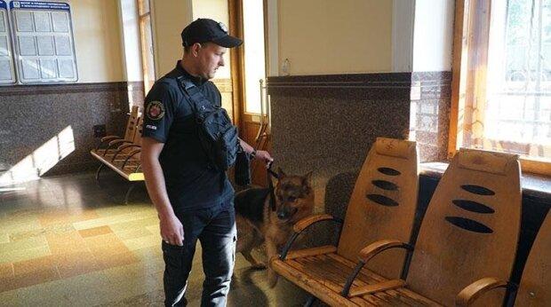 Вінницька школярка втекла в Київ до хлопця, батьки посивіли за одну ніч: чим закінчилася витівка малолітньої Джульєтти
