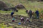 Фермери, Уніан