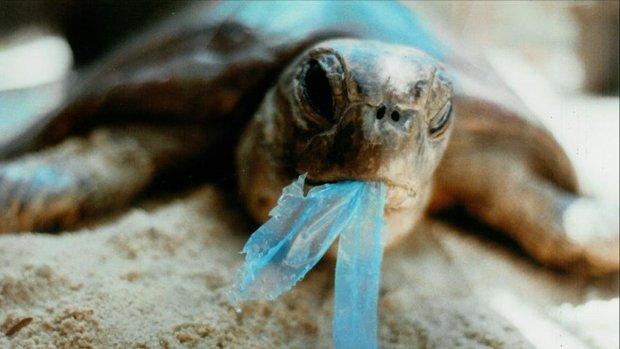 забруднення планети пластиком