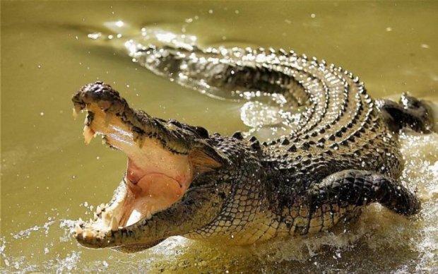 Охотник потерял дар речи, когда увидел это в желудке гигантского крокодила