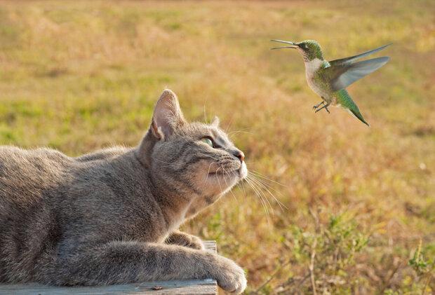 Уничтожают птиц и летучих мышей: владельцев кошек будут судить за вред биоразнообразию