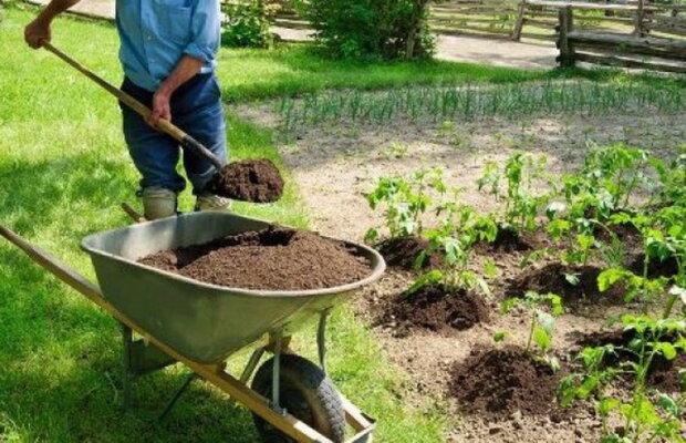 як і коли удобрювати город