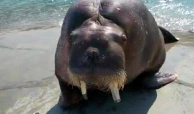 Селфі з моржем убило двох китайців