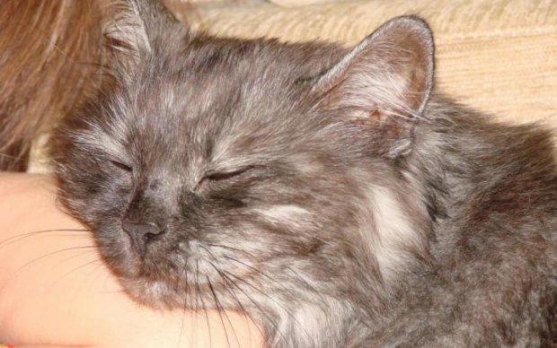 Блудный кот вернулся к хозяйке спустя 12 лет