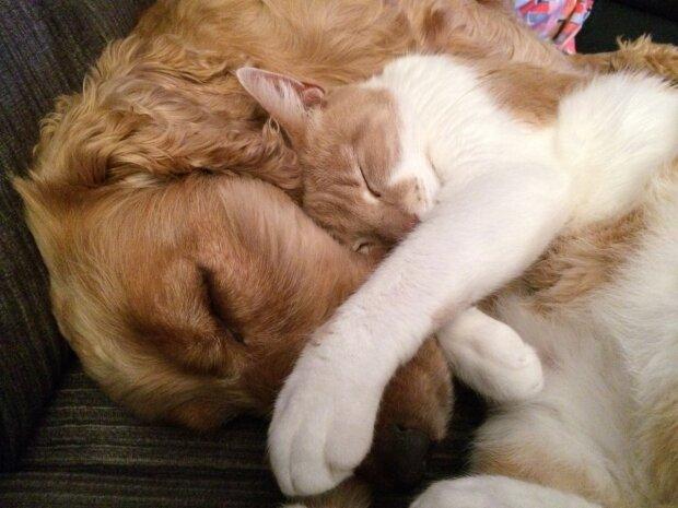 Собака и кот, фото Pxhere