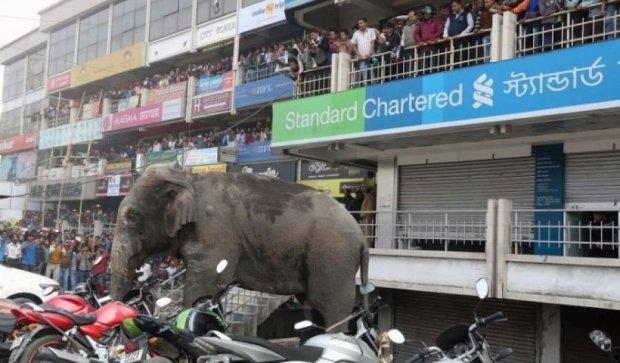 Слон едва не разнес городок в Индии (видео)