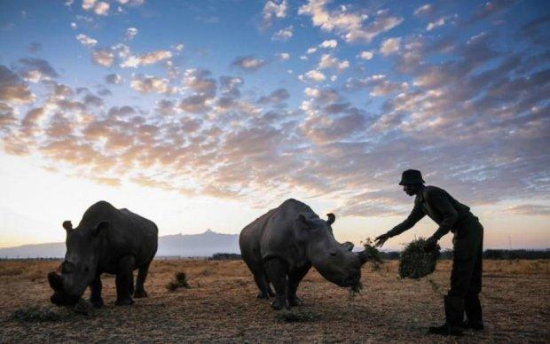 Світ втратив останнього білого носорога