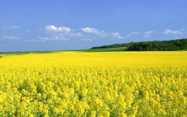 Есть чем горчица: Украина нарастила продажу семян