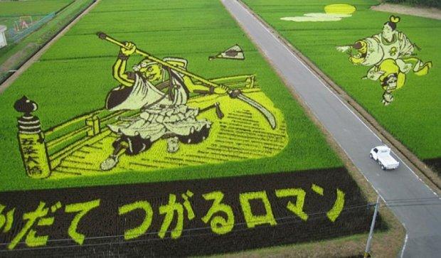 """Японські селекціонери створюють """"живі"""" рисові поля (фото)"""