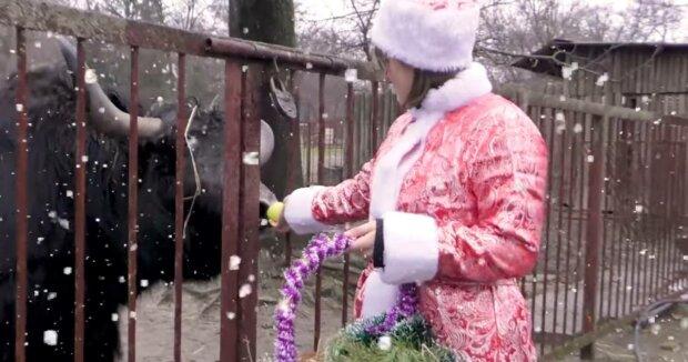 Киевский зоопарк, фото: скриншот из видео