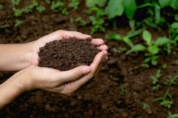 как и когда удобрять огород