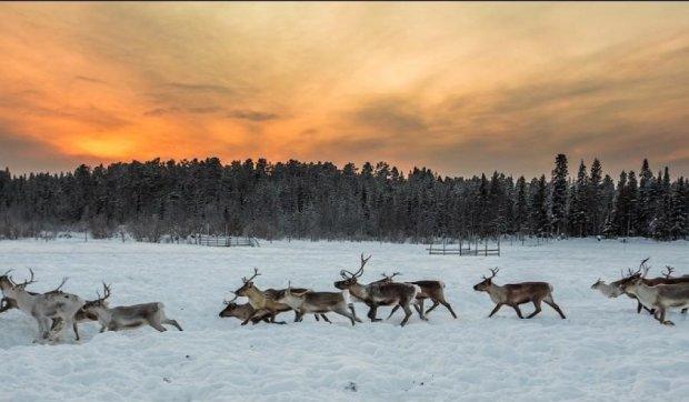 Садисты расстреляли стадо оленей на трассе Киев-Чоп