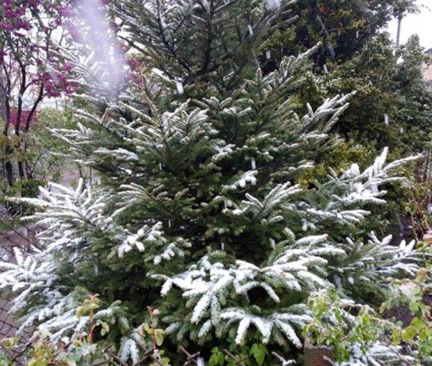 сніг, фото з Facebook