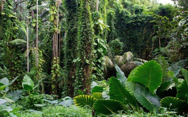 На Антарктиде обнаружен тропический сад