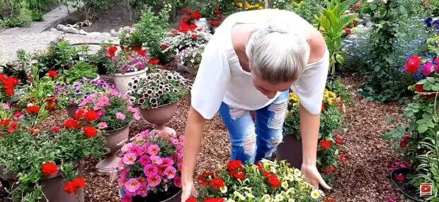 Цветы, фото: скриншот из видео