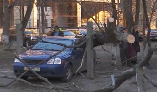 """Штормовий вітер влаштував """"деревопад"""" на Франківщині, кадри сумних наслідків"""