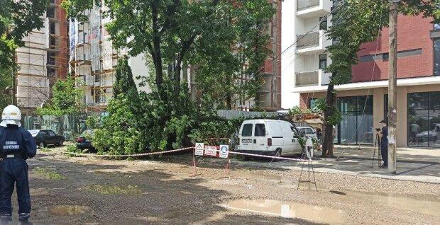 Стихія перевернула Франківськ з ніг на голову - повалені дерева та роздавлені машини