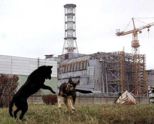 Чорнобильська зона ожила і вкрилася квітами, фото аномалії виклали в мережу