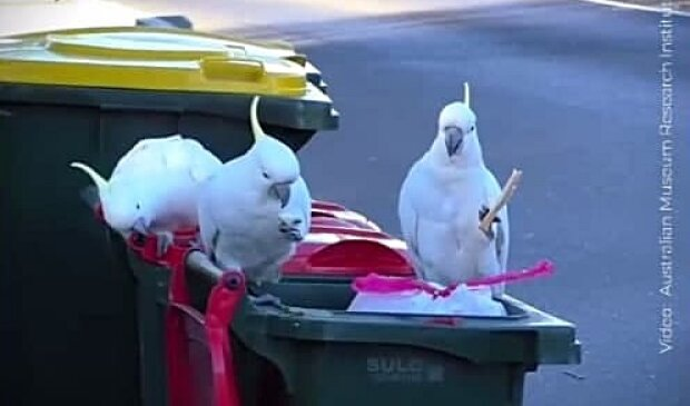 Папуги, скріншот з відео