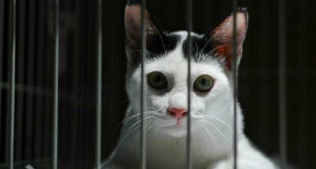 """Худший кот в мире: приют составил оригинальное """"резюме"""" на пушистика, смешно до слез"""