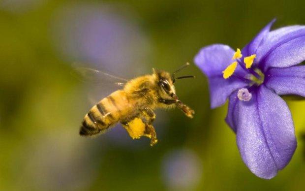 Дивовижне відкриття: бджоли в черговий раз вразили вчених
