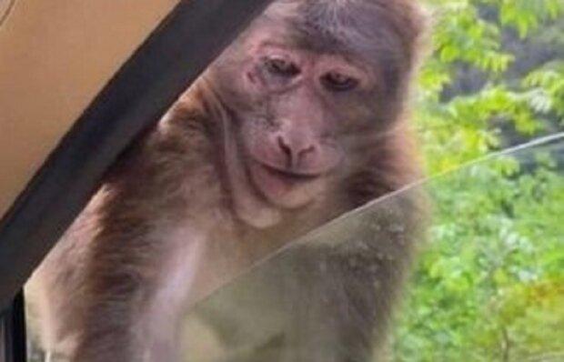 Мавпа, фото: Facebook інтелектуальний гумор