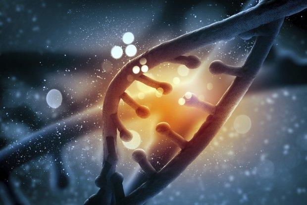 Перебудовує ДНК: генетики розповіли, як алкоголь викликає залежність
