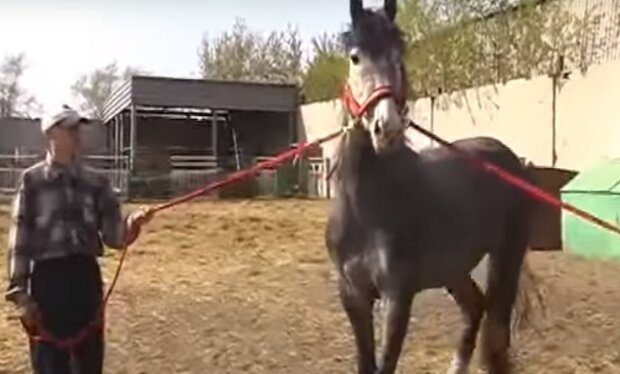 На Тернопільщині табун коней окупував місто - природа очистилася на карантині