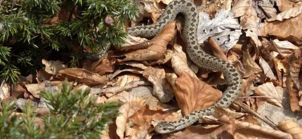 Змея, фото: Facebook