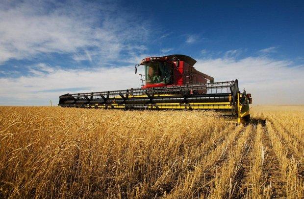 Україна збирає рекордні врожаї, але радіти не варто: чим це загрожує