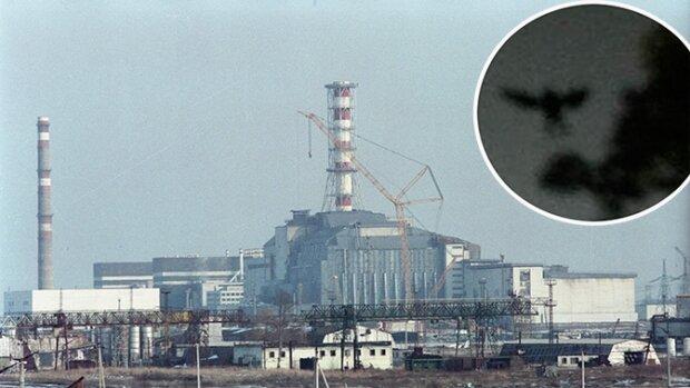 """""""Подставляли и лишали покоя"""": жена ликвидатора Чернобыльской АЭС рассказала, что произошло на самом деле"""