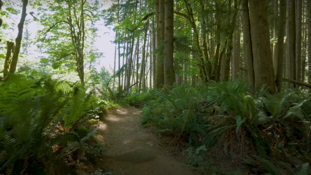 Ліс, скріншот із відео